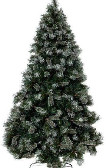 Eucalyptus Oregon Pine Tree 210cm