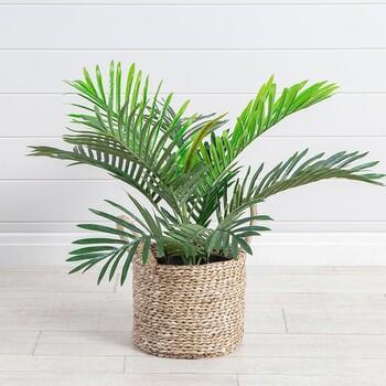 Mini Palm by M.U.S.E.