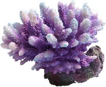 Aqua One Acropra Aquatic Ornament Purple