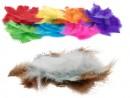Colorific-Feathers Sale
