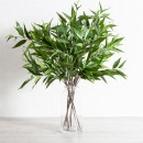Eucalyptus-Branch-Stem-by-M.U.S.E Sale