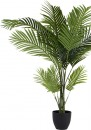 Areca-Palm-120cm Sale