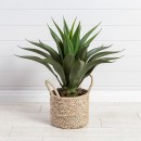 Agave-Americana-Plant-by-M.U.S.E Sale