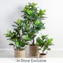 Fiddle-Leaf-Fig-by-M.U.S.E Sale