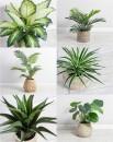 Artificial-Plants Sale