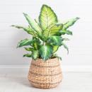Camille-Plant-by-M.U.S.E Sale