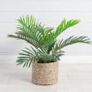 Mini-Palm-by-M.U.S.E Sale