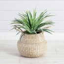 Spider-Plant-by-M.U.S.E Sale