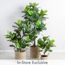 Fiddle-Leaf-Fig-by-M.U.S.E Sale