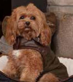 Harmony-Yoke-Dog-Jacket-Olive on sale