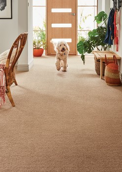 Haven-Hazelton-Family-Friendly-Choices-PET-Twist on sale