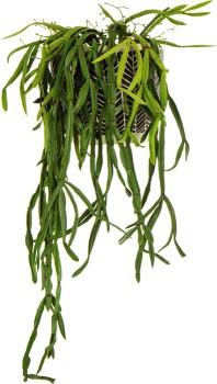 Rhapsalis-Vine-Artificial-Plant on sale