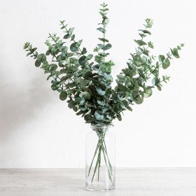 Eucalyptus-Stem-by-Aspire on sale