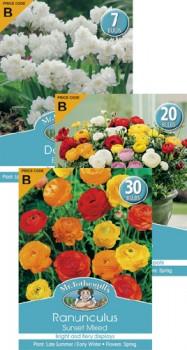 Mr.-Fothergills-Price-Code-B-Autumn-Bulbs on sale
