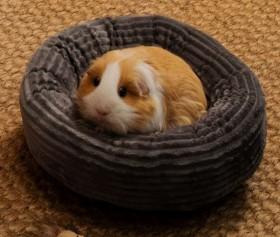 Harmony-Mystique-Cord-Velvet-Round-Small-Pet-Basket on sale