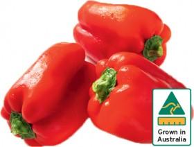 Red-Capsicum on sale