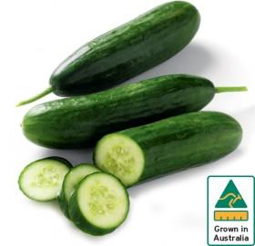 Lebanese-Cucumber on sale